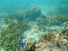 沖縄の海はとってもきれいです